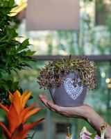 Beautiful House plant on the hand photo