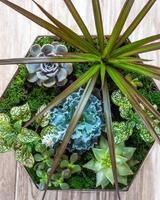 Terrarium plant in pot with cactus succulent close up from above photo
