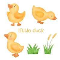 Watercolor little yellow duck vector