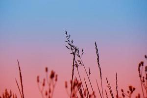flower plant silhouette and sunset in spring season photo