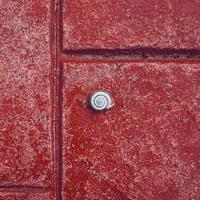 pequeño caracol blanco en el suelo rojo foto