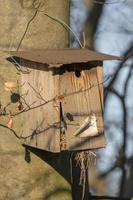 Old homemade bird nesting box hangs broken on a tree photo