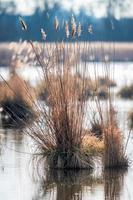 Isla de juncos con pasto seco y reflejos en el agua foto