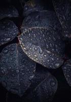 gotas de lluvia sobre las hojas de las plantas verdes en días lluviosos foto