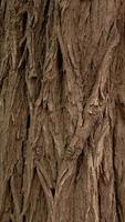 Fondo de textura de relieve vertical de la corteza marrón de un árbol foto