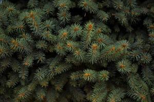marco de navidad en el fondo de un árbol de navidad foto