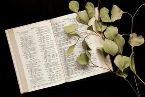 Vista superior de una Biblia abierta con una ramita de hojas sobre un fondo oscuro foto