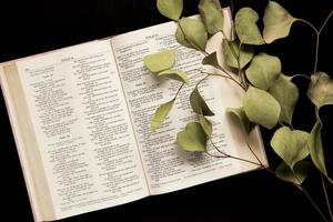 Top view of an open Bible with a sprig of leaves on a dark background photo