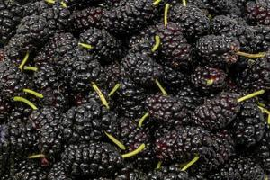 Black mulberries with green stems as background photo