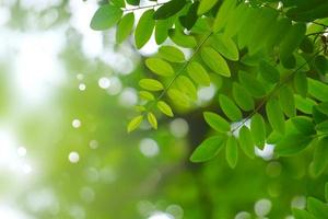 green tree leaves in the nature in spring season green background photo