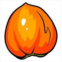 Juicy bright persimmon A healthy fruit Vitamins Handmade style vector