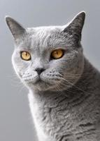 Gray kitty with monochrome wall behind her photo