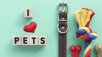 Pet accessories still life concept with i love pets text photo