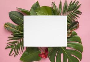 vista superior mínima composición de hojas tropicales foto