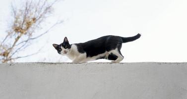 Vista lateral del gato en la pared de la granja. foto