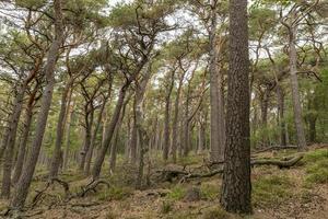 Vistas a un valle arbolado con pinos y árboles de hoja caduca foto