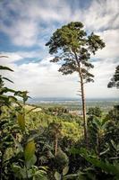 Solo pino se encuentra en una montaña con una amplia vista de un valle en Alemania foto