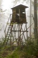 Cazador de madera encaramado en el borde del bosque en la niebla en el bosque de pinos otoñales foto