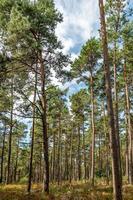 bosque de pinos brillante con cielo azul y helechos foto