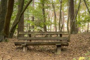 Old decayed wooden bench stands under deciduous trees on a hill photo