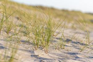 German Baltic Sea coast with sand dunes grass water and sky photo