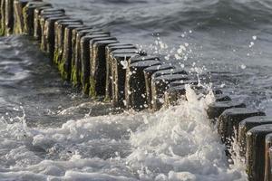 Olas rodearon troncos en la costa báltica en la arena foto