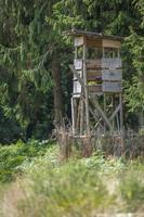 Cazador de asiento alto en el borde del bosque en frente de un prado con fondo verde foto