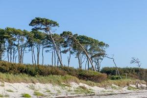Bosque de pinos en la costa báltica alemana con dunas y arena foto