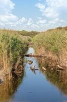 Canal de drenaje en la costa del mar Báltico cerca de Darss en Alemania con juncos y hierba foto