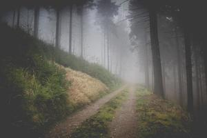 Foggy way of forest photo