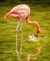 Close up of flamingo photo