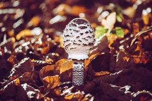 white and brown mushroom photo