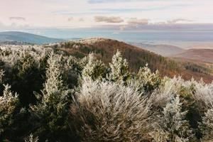Mountain pine in the mountains against the sky photo