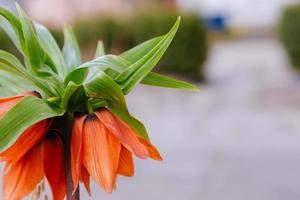 Beautiful orange flower on blurry background photo