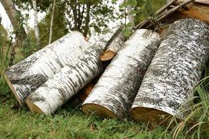 birch log logs firewood reserves photo