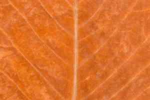 Golden autumn leaf background photo