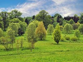 Árboles jóvenes en primavera en el Yorkshire arboretum North Yorkshire, Inglaterra foto