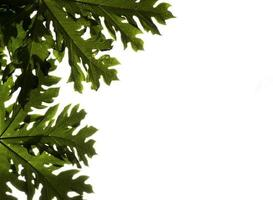 close up of Leaves on cloudy sky background photo
