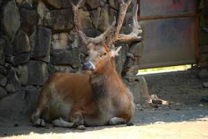 Deer at the zoo park photo