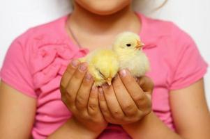 chick newborn baby holding kid farmer hands photo