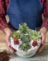 jardinero hlding terrario con cactus suculentas foto