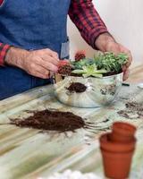 Jardinero haciendo terrarios de plantación con cactus suculentas. foto