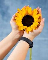 Woman holding single sunflower with blue background photo