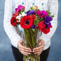 Woman holding red magenta pink Papaver rhoeas Common poppy flower bouquet photo