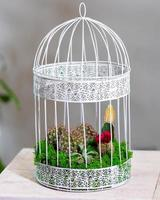 Beautiful terrarium with cactus flower rock sand in the cage photo