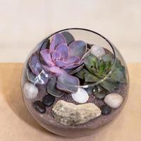 Beautiful terrarium with cactus flower rock sand inside the glass photo