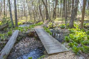 Wooden bridge going over a stream in the woods photo