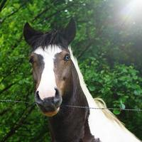 Hermoso retrato de caballo marrón en la pradera foto