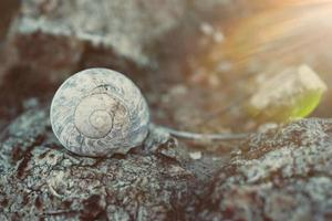 little snail in the nature photo