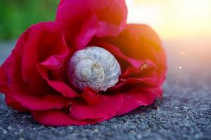 little white snail in the nature photo